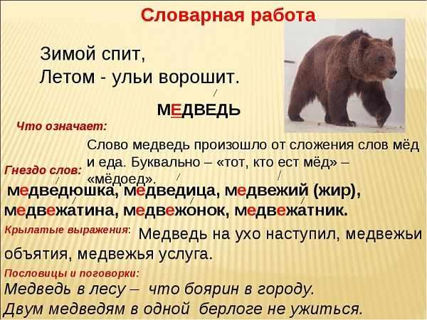 Медведь проверочное слово