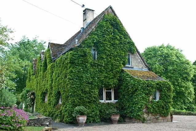 дом в плюще