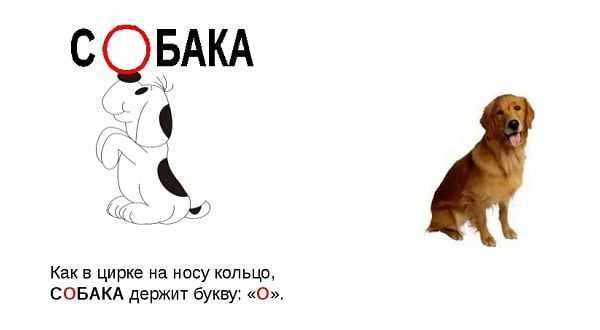 Правописание слова собака