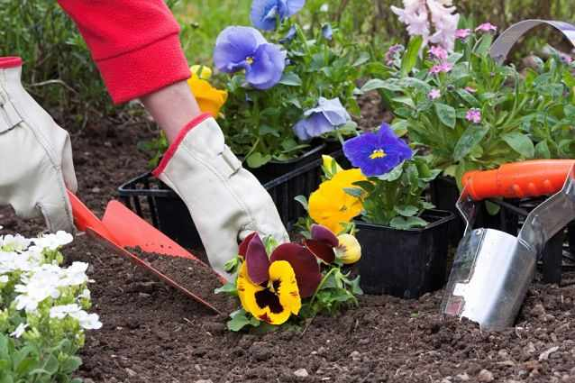 сажает цветы