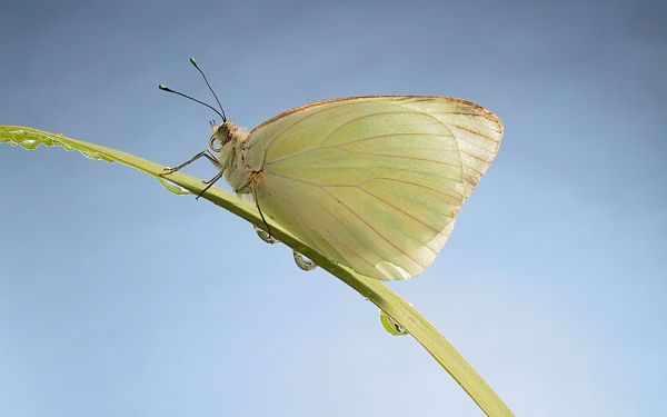 Бабочка на стебельке