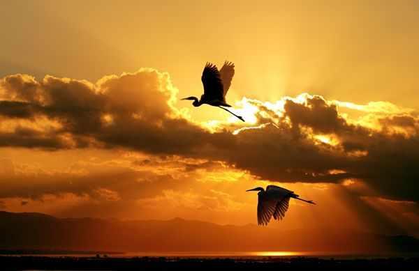 Птицы улетают