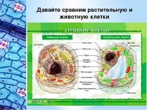 Что такое клетка живого организма