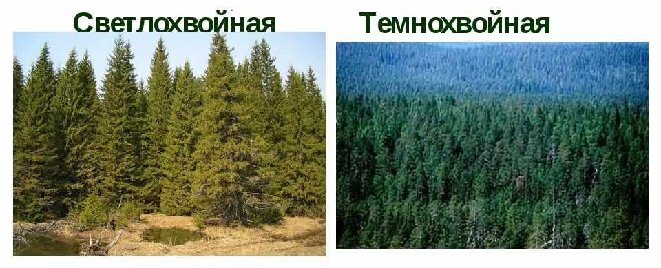 природная зона россии