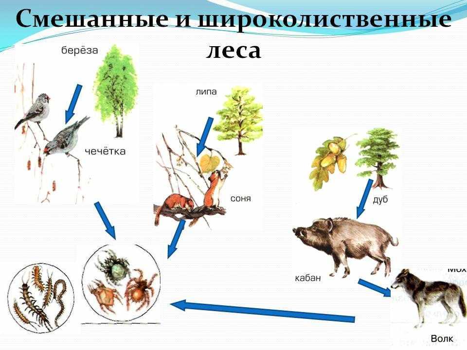 пищевая цепь примеры (главный ключ)