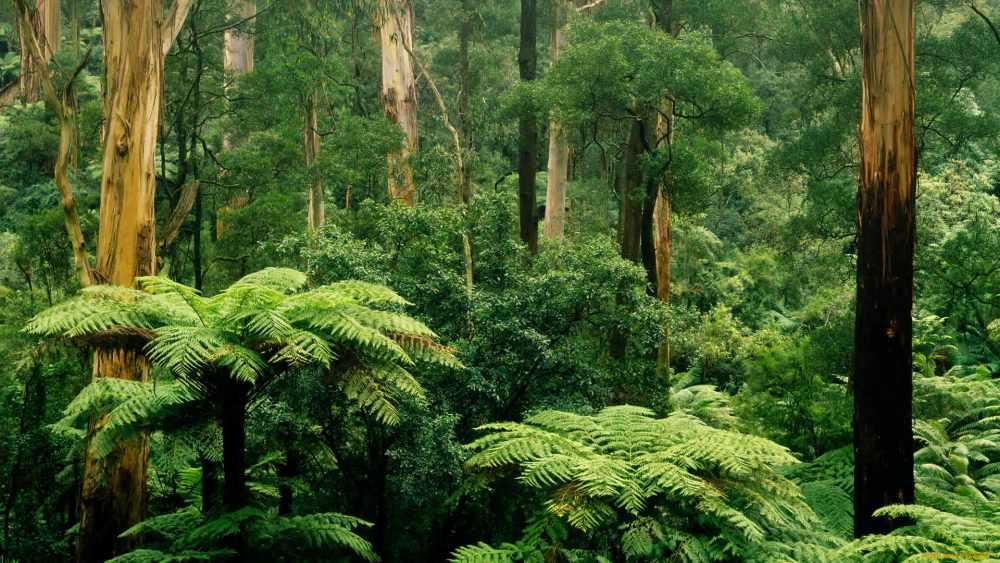животные влажных экваториальных лесов
