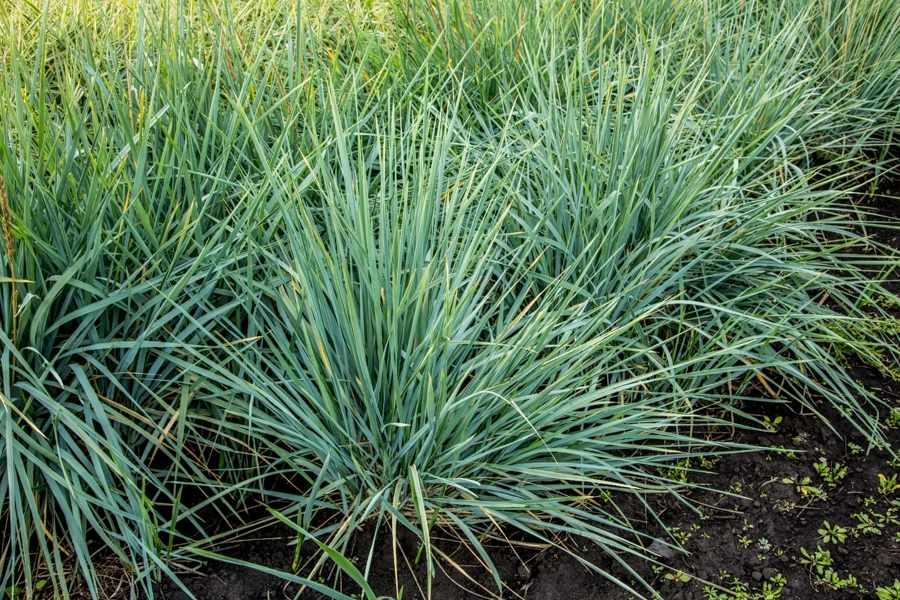 растения степной зоны (главный ключ)