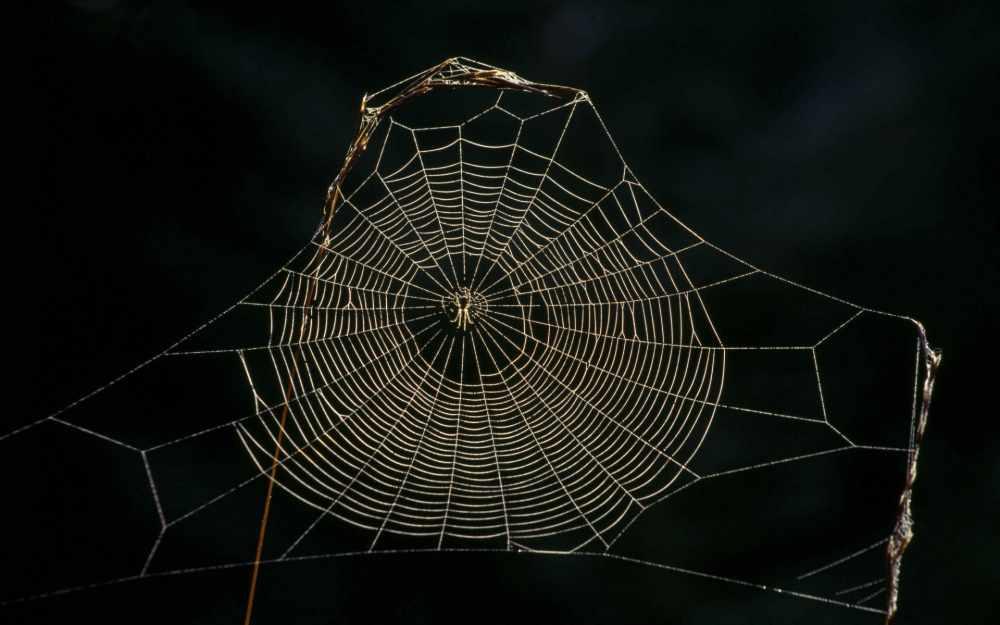 представитель пауков (главный ключ)
