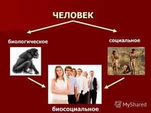В чем состоит биосоциальная сущность личности
