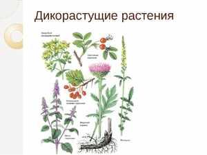 Польза корней растений