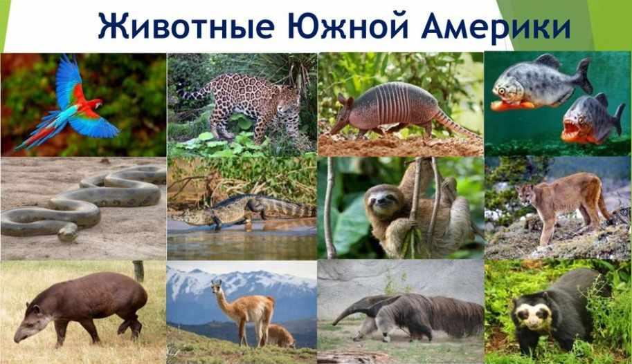 северные животные