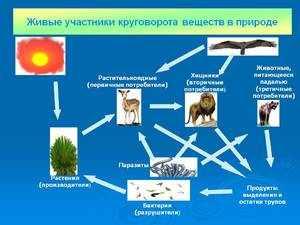 Углерод в биосфере