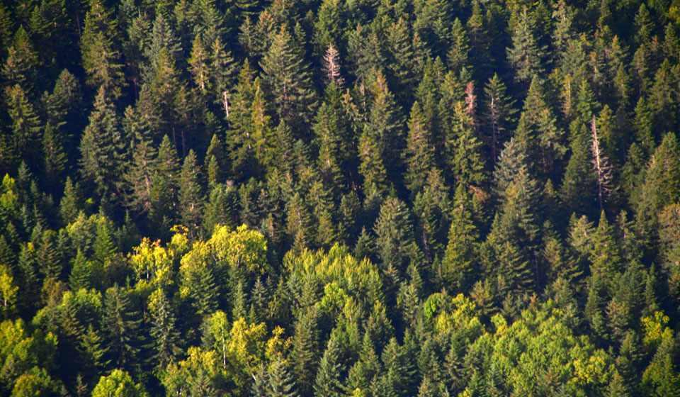 Закон о сборе валежника в лесу в 2018 году: когда вступит в силу ...
