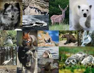 Ресурсы флоры и фауны
