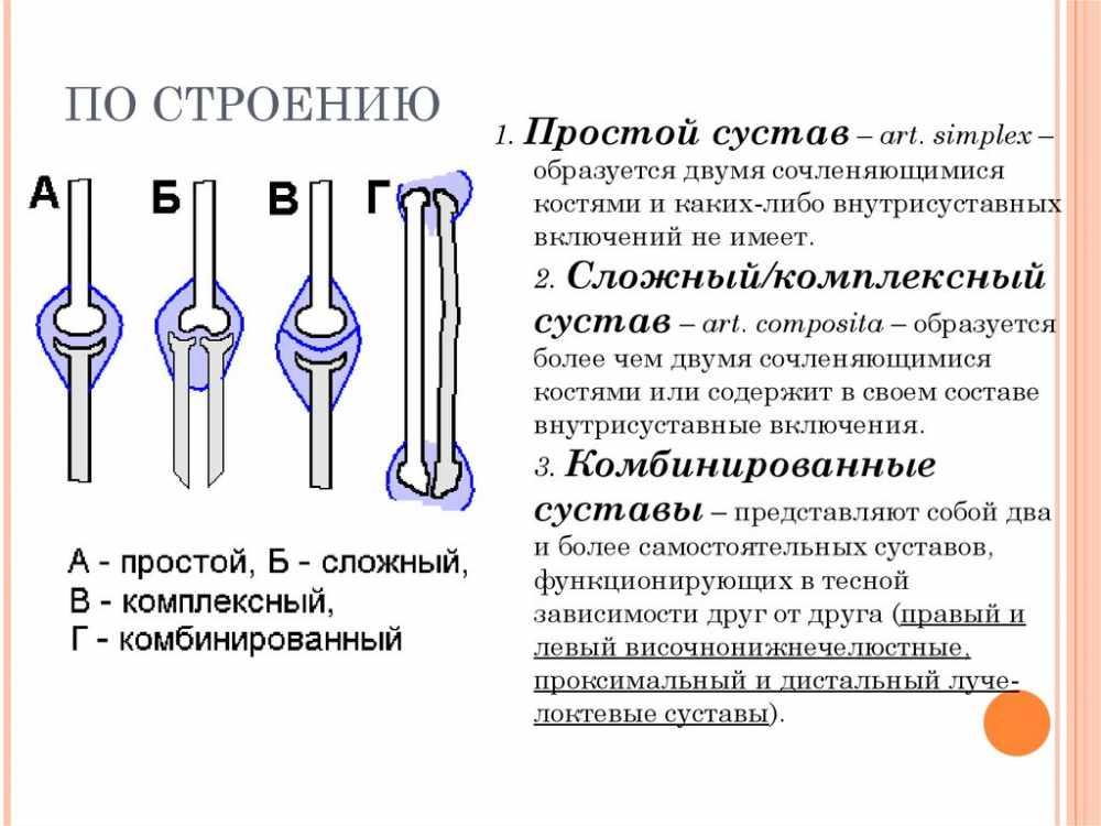Прерывные и непрерывные соединения костей. Характеристика сустава ...