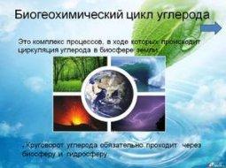 Биогеохимический круговорот углерода в природе