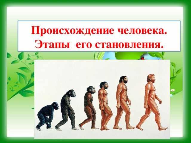Происхождение человека. Этапы его становления. - биология, презентации