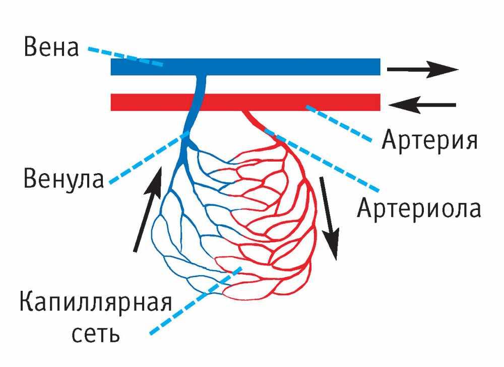 MedWeb - Сосуды