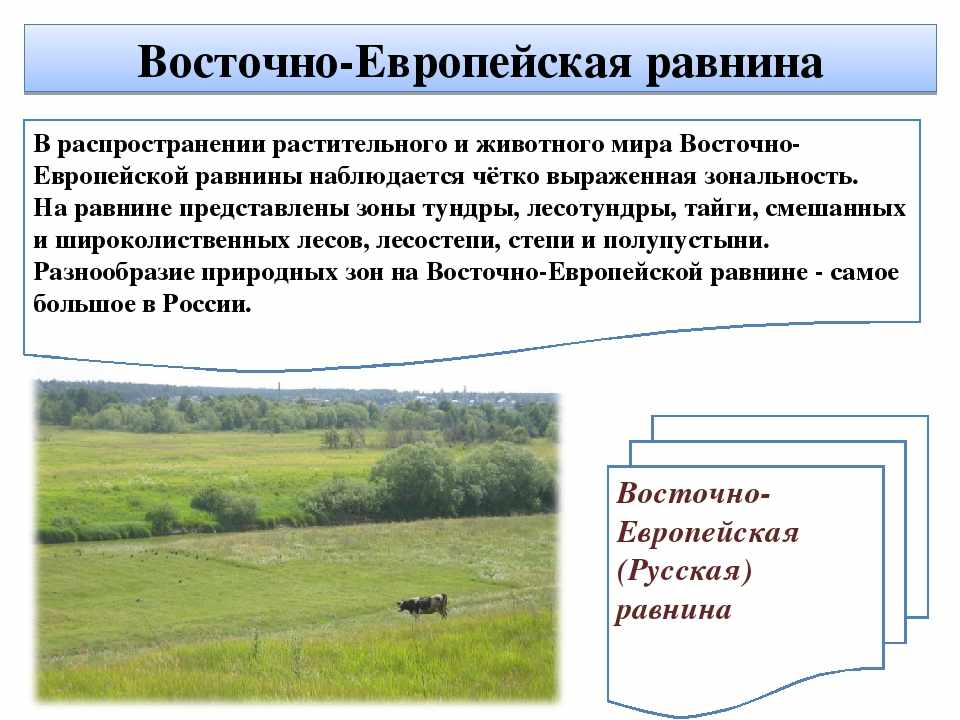 климат русской равнины (главный ключ)