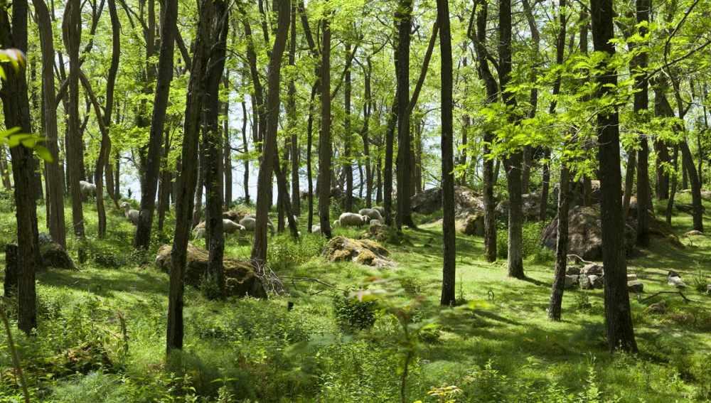 переменно влажные леса