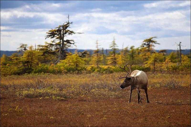 растительный мир саванн
