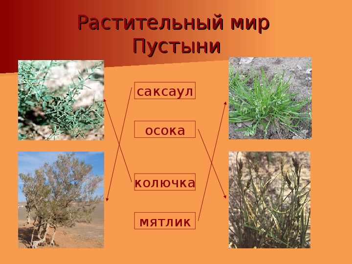 Зона пустынь - презентация (животные и растения)