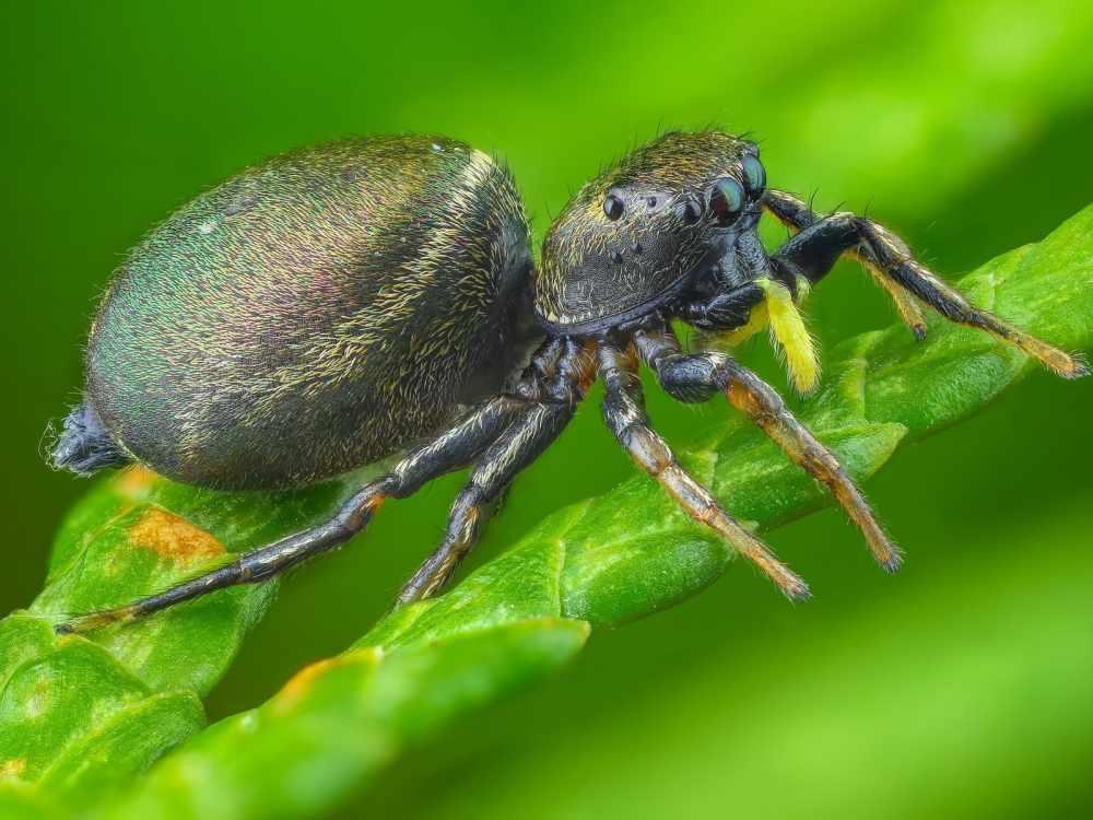 паук это насекомое или нет