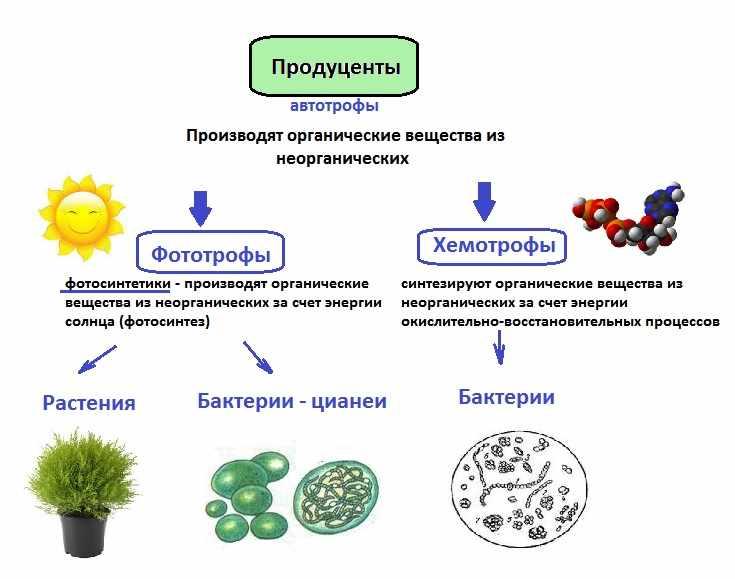 Компоненты экосистемы - материалы для подготовки к ЕГЭ по Биологии