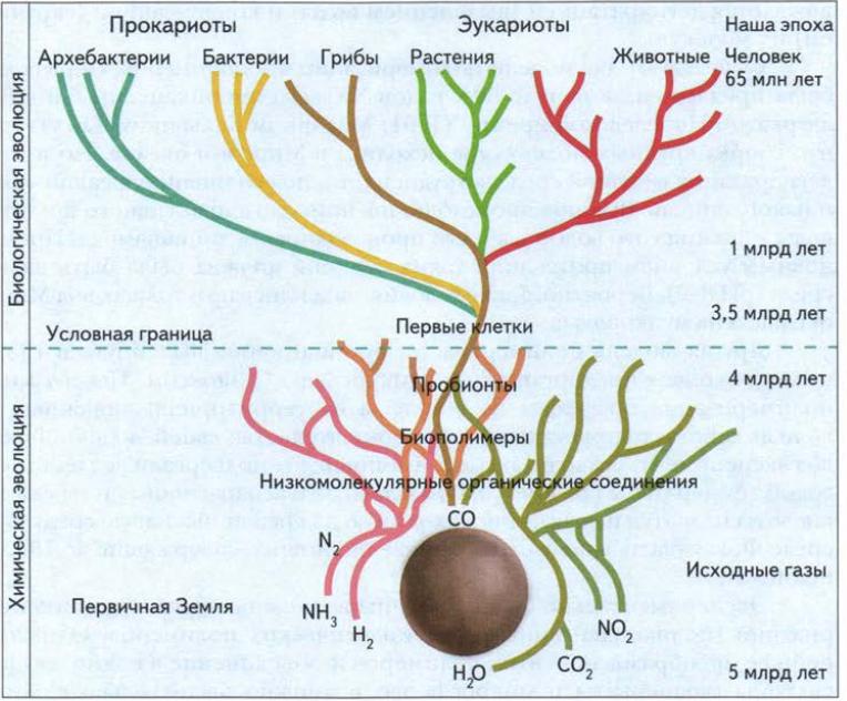 Этапы возникновения жизни на Земле | Биология