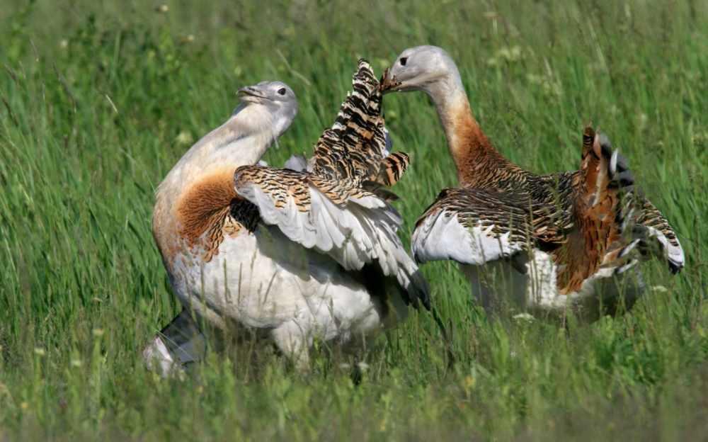 птицы челябинской области
