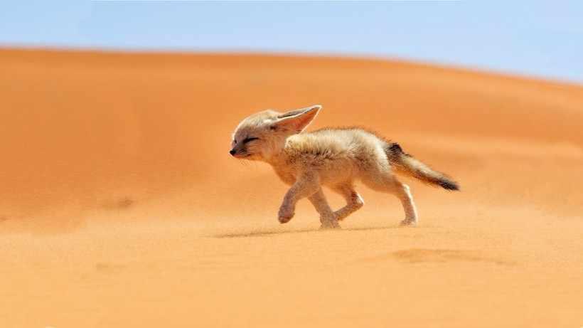 Кто живет в пустыне - Other