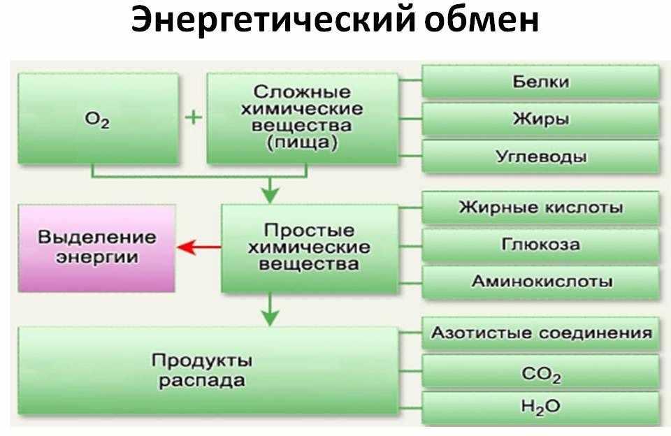 natured: скачать бесплатно презинтцию энергетический обмен