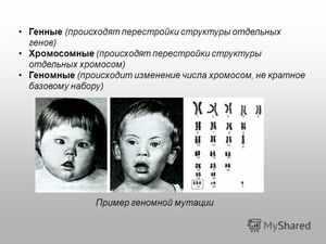 Виды хромосомных мутаций