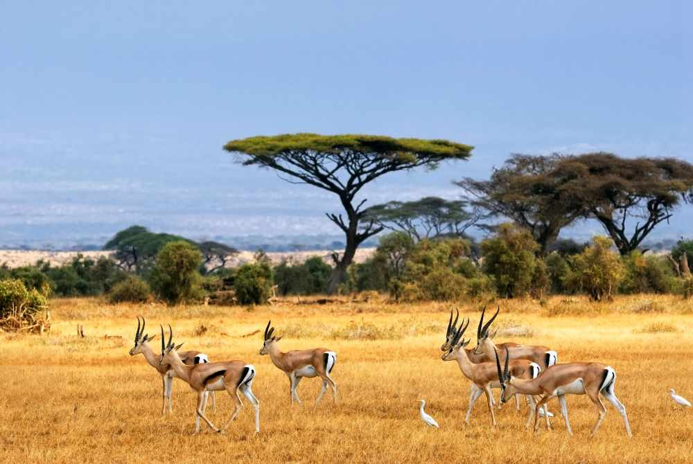 саванна, antelopes, safari, африка, african landscape, антилопы ...