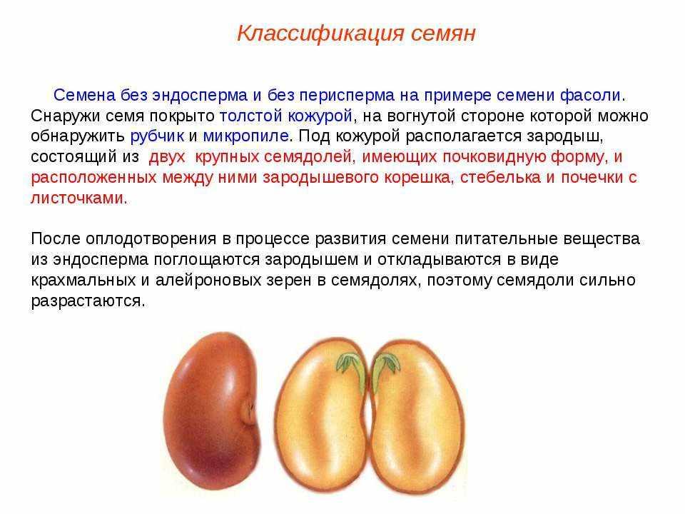 Презентация на тему Семена, плоды - скачать бесплатно презентации ...
