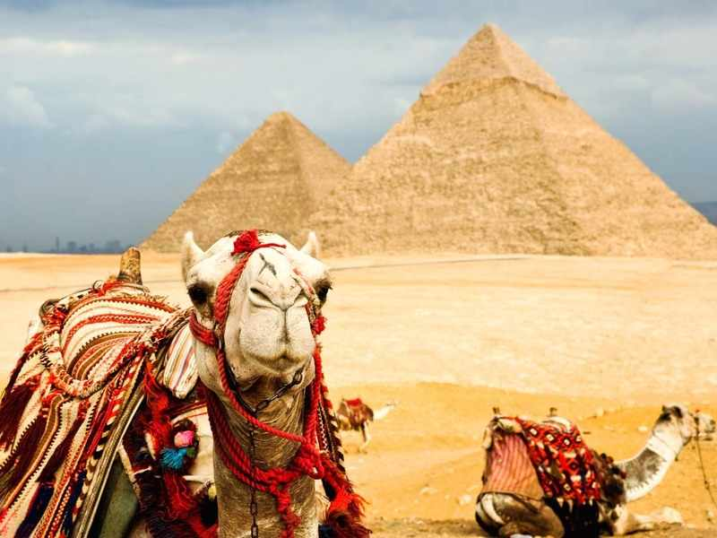 Корабль пустыни - верблюд