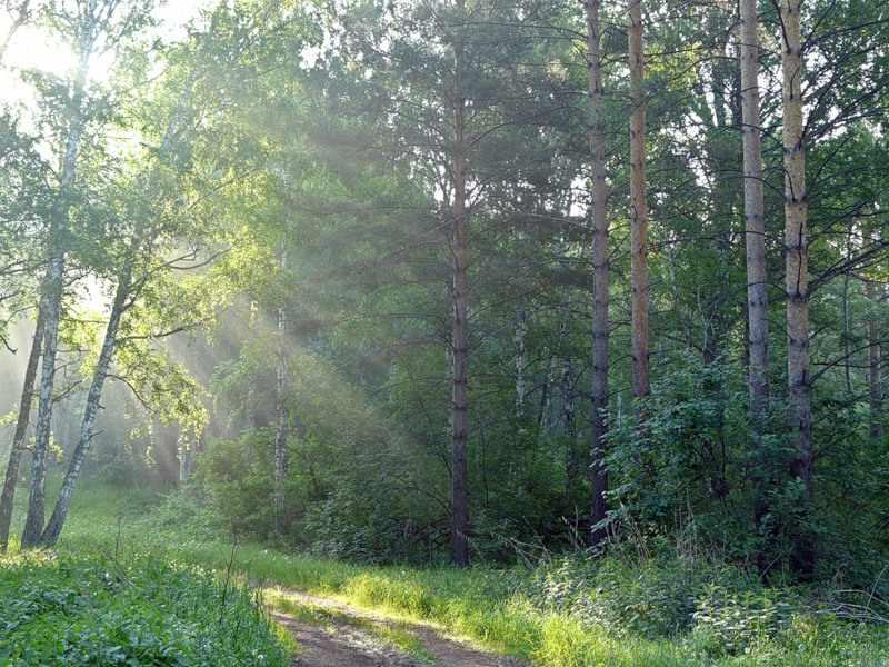 смешанные леса россии
