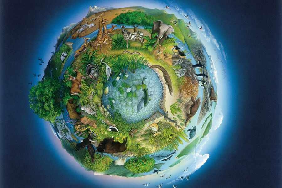Биосфера: термин, состав, строение, свойства - EcoBloger