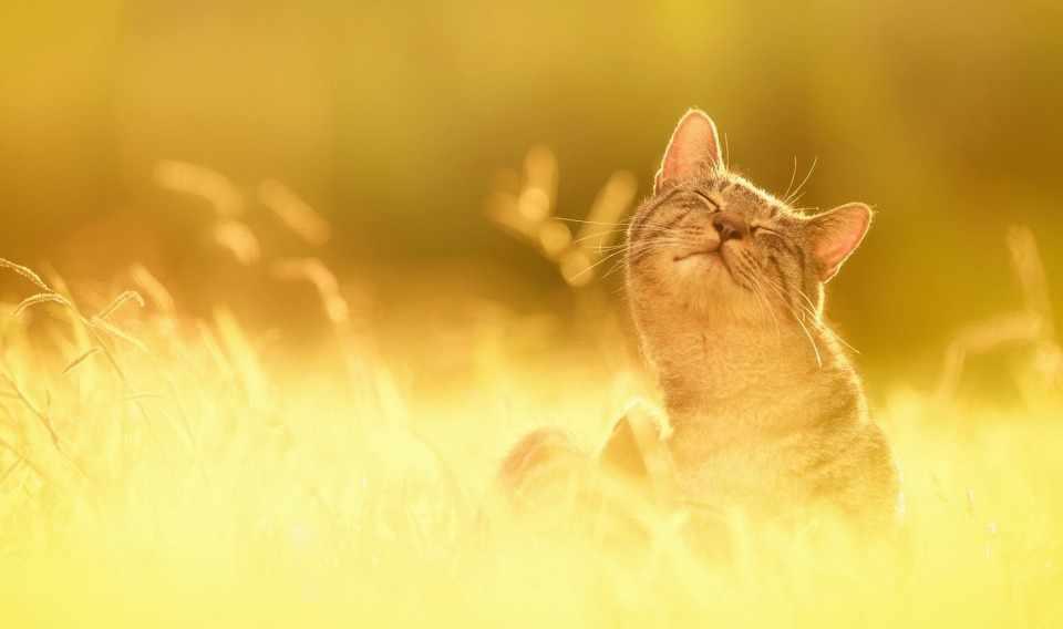 Картинка Солнечная Погода