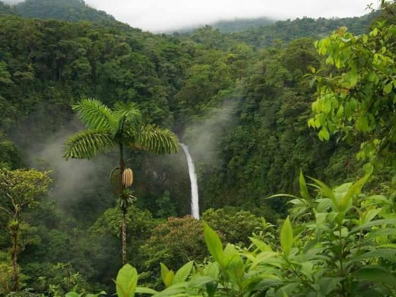 Что такое тропические леса? Их животные и растения