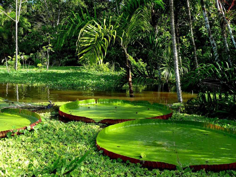 ценность тропических лесов