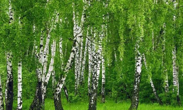 лес это легкие земли