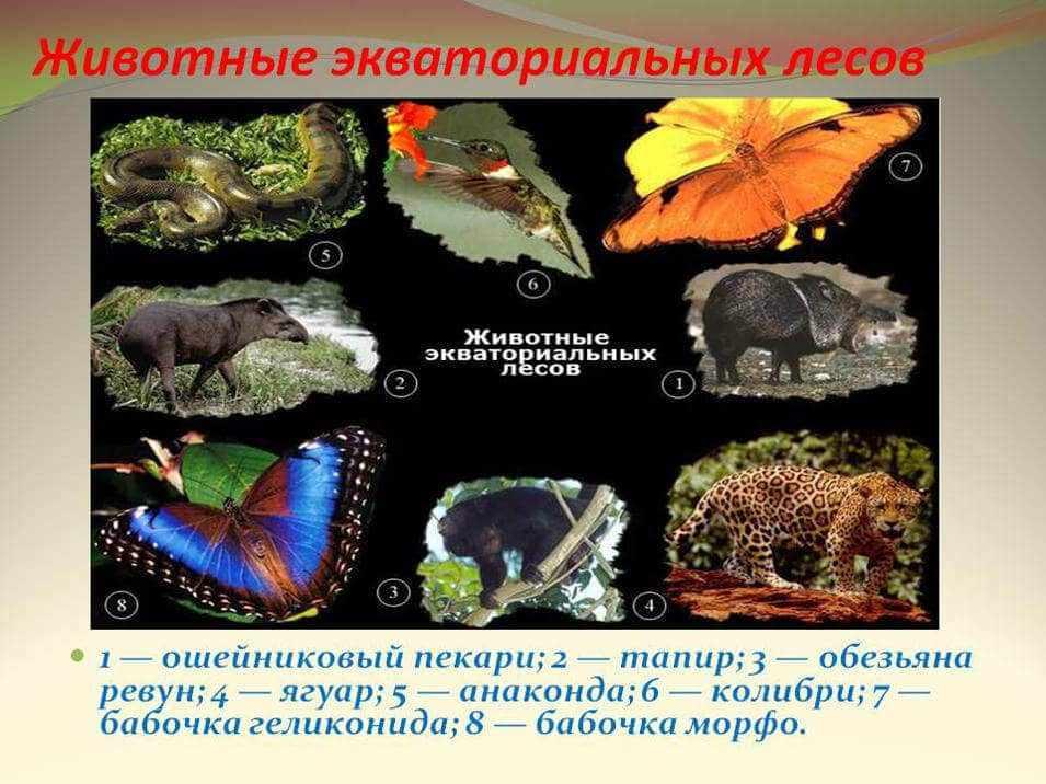 природные зоны мира и их характеристика таблица