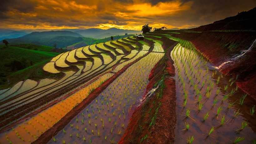 Потрясающие террасовые поля народа ифугао: место, где рис дороже золота
