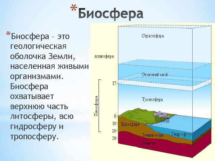 Ларина Юлия 10 А Биосфера