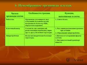 Особенности немембранных органоидов