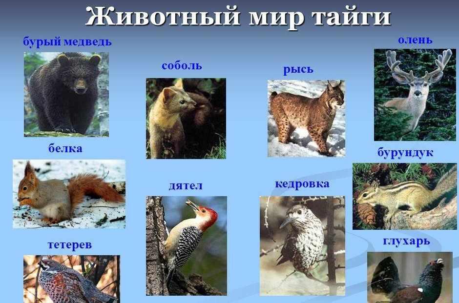 Презентация на тему: Животный и растительный мир России. Зона ...