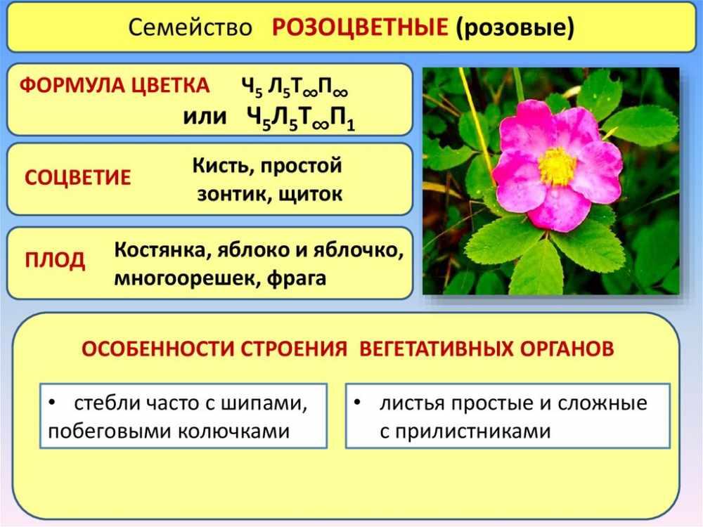 соцветие розоцветных