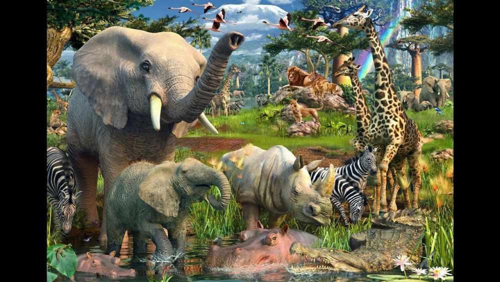 Животный мир. Детям про животных. - YouTube