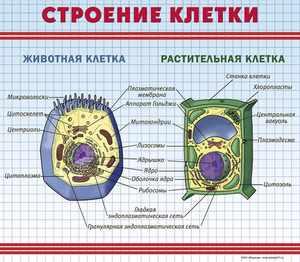 Чем отличаются клетки друг от друга